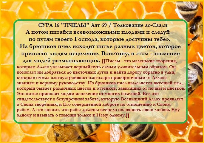 Башкирский мед польза и свойства