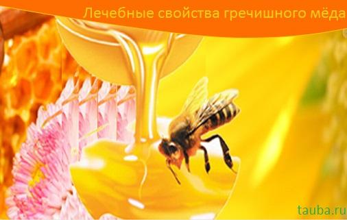 Гречишный мед: полезные свойства