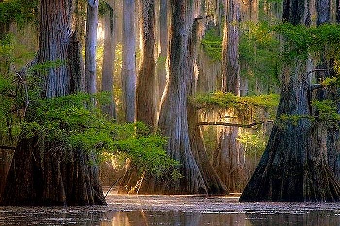 Деревья - это легкие планеты, берегите их ради Аллаха