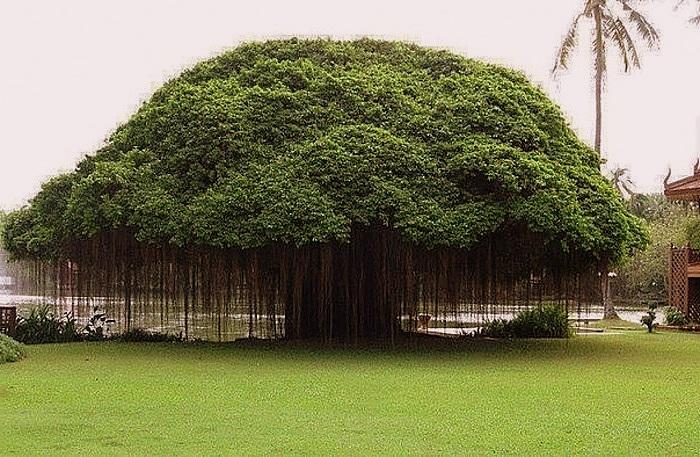 Необычное дерево на Земле
