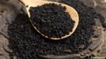 Черный тмин: полезные свойства, применение семян и масла