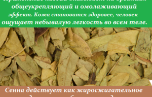 Сенна мекканская — применение, полезные свойства и противопоказания