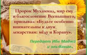 Мед — полезные свойства, применение и рецепты