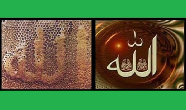 Имя Аллаха в сотах, знамение для людей