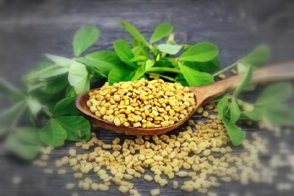Хельба семена применение и противопоказания