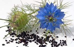 Основы лечения черным тмином в восточной медицине