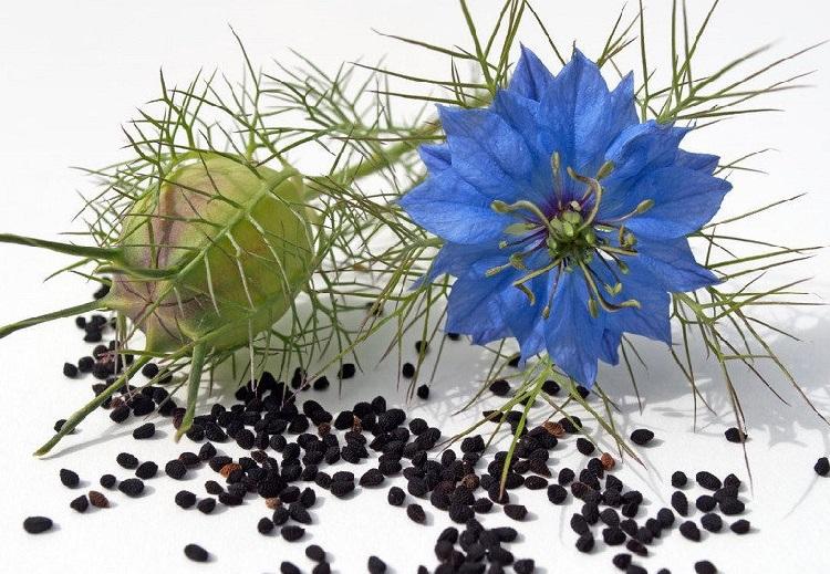 лечение семенами черного тмина виталий островский черного